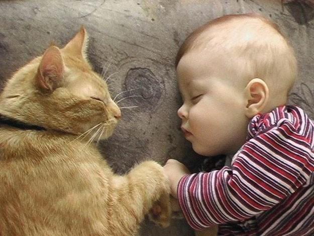 Bimbi e gatti